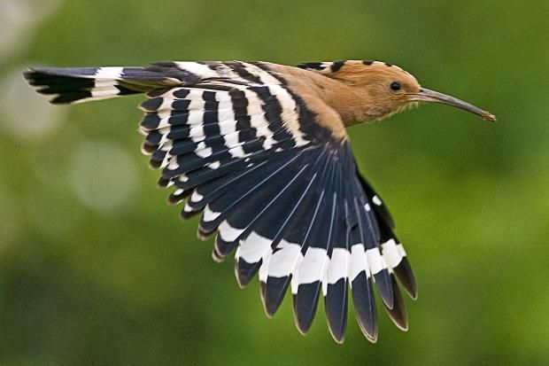 Wayward exotic bird lands in Britain by mistake   The Times