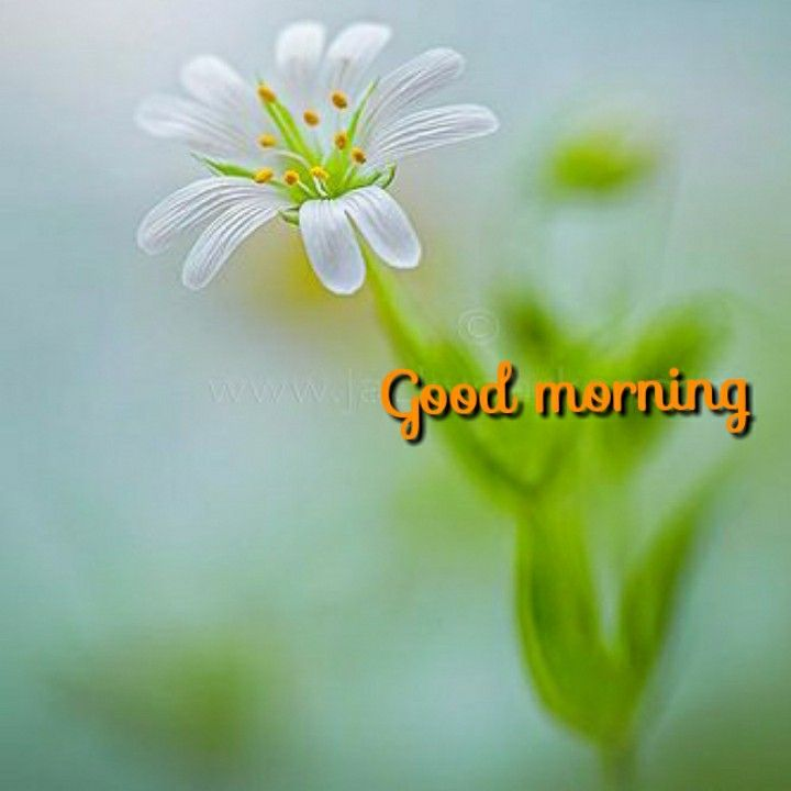 Pin By Avanthi Herbals On Good Morning Good Morning Morning Images Good Morning Saturday