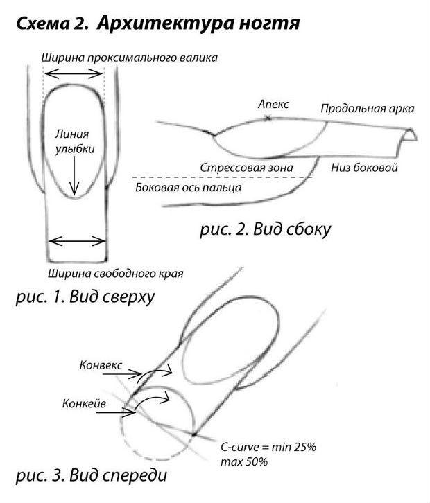 Ширина ногтя в зоне стресса и