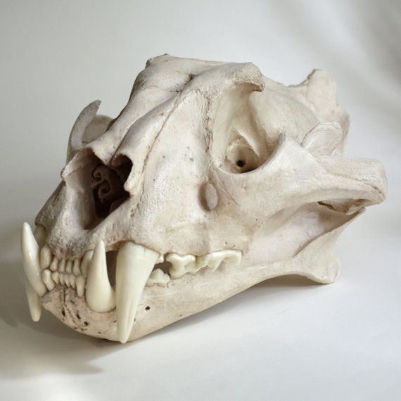 Tiger Skull Replica by artskulls on Etsy