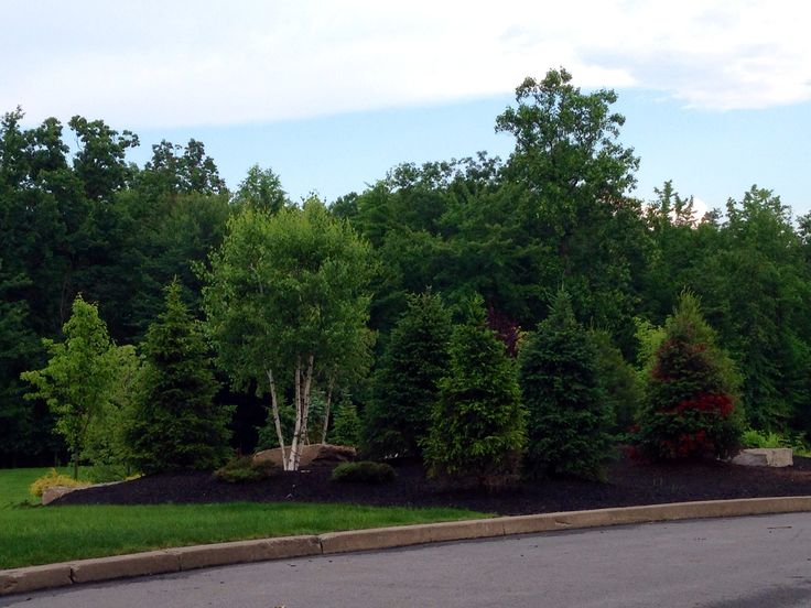 Evergreen Landscape Berms Ideas