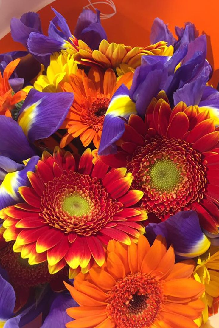 Favori 99 best Fiori, bouquet e composizioni floreali images on Pinterest  UK82