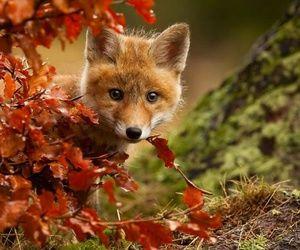 renard automne feuilles bébé renardeau
