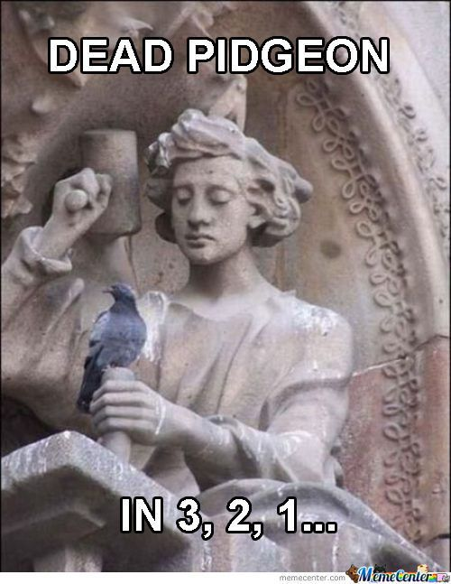 To people who have never seen Doctor Who, this is the most random picture on the Internet. To Whovians, this means certain death for that pigeon.