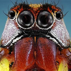 Best NATURE INSECTS Images On Pinterest Beautiful Bugs - Each of these macro bug photographs is made from thousands of individual images
