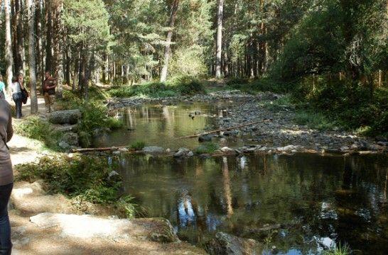 Los 19 mejores bosques de España | EROSKI CONSUMER. Varios expertos forestales destacan 19 bosques entre la gran variedad y riqueza que existe en España y que debemos proteger entre todos
