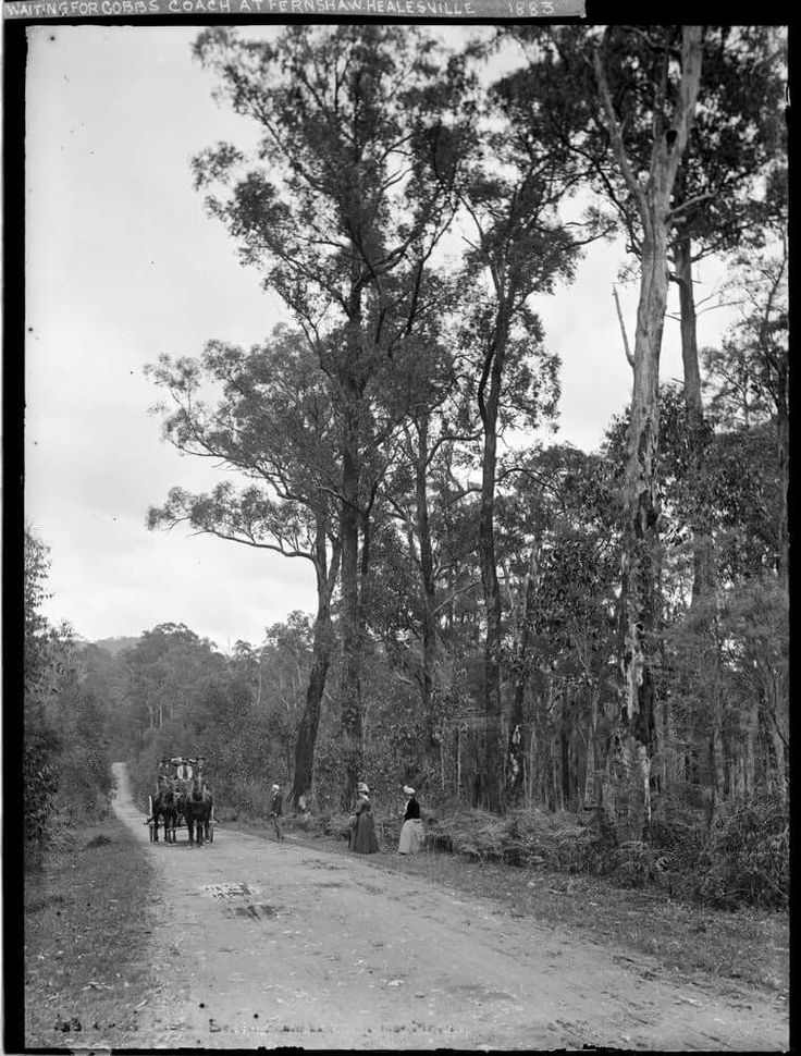 Waiting for Cobb's Coach, Fernshaw - Healesville, Victoria circa 1883. Slv image.