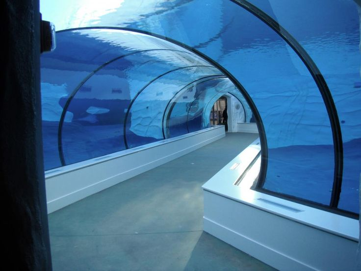 The Arctic Ring of Life at the Detroit Zoo features a tunnel that lets visitors walk through the frigid waters to see polar bears & seals as they swim.