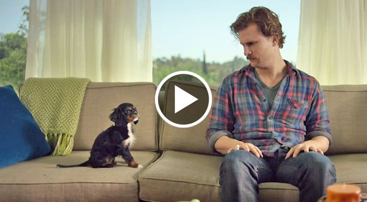 A man was just walking down the street, minding his own business when a King Charles Cavalier puppy barked at him. When their eyes met, he...