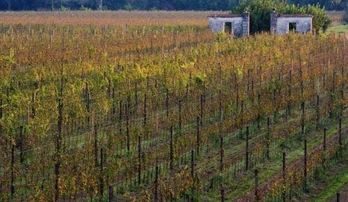 A Pozzuolo del Friuli per conoscere la storia di Alessandro Job, un vignaiolo folle (in senso buono)   /   In Pozzuolo del Friuli, discovering the story of Alessandro Job, a crazy (in a good sense) wine producer