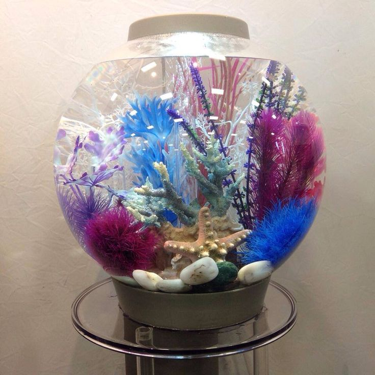 Decorating a fish tank is as important as the fish you put for Betta fish bowl ideas