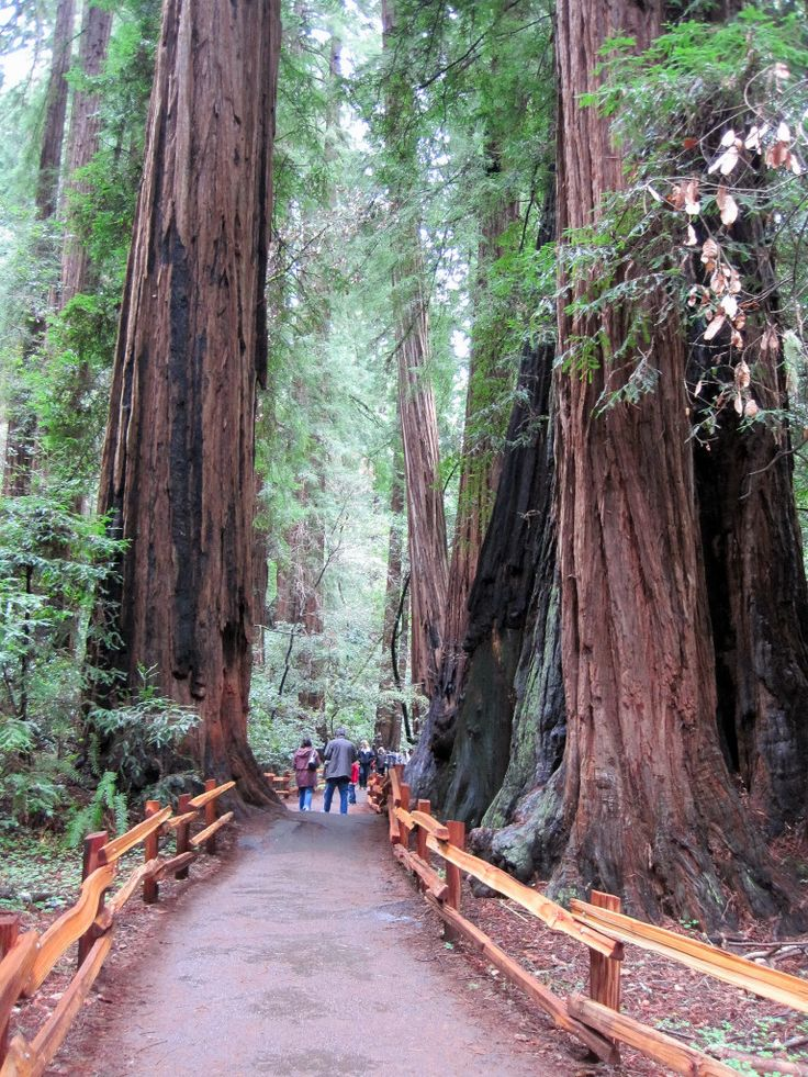 Muir Woods National Monument  Mill Valley, California: Places Site, Favorite Places, California Dreamin, Califusa Places, Monuments Mills, Pinterest Places, Mills Valley California, Muir Wood National Monuments, San Francisco
