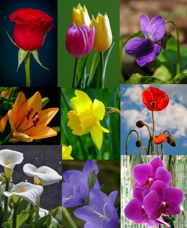 Önismereti teszt: Milyen virág lennél?   Az írás tükrében