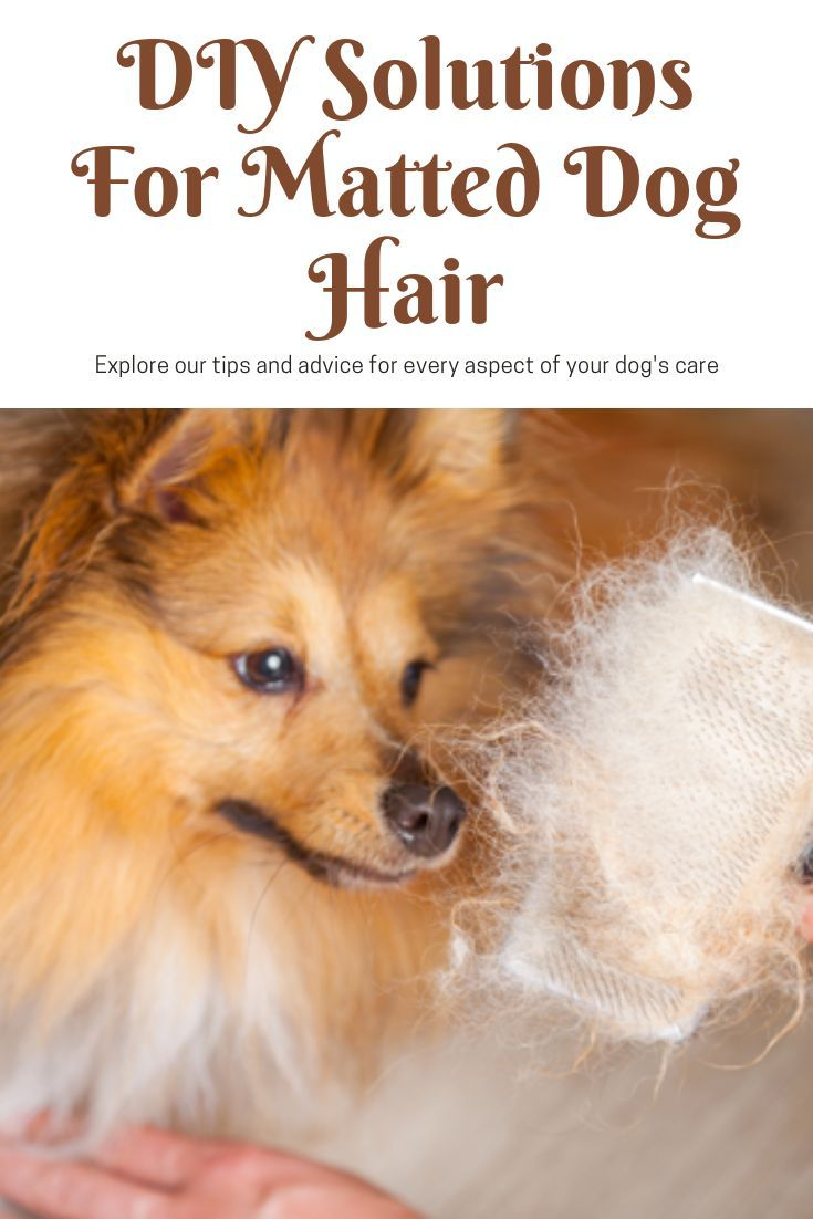 Diy Solutions For Matted Dog Hair Matted Dog Hair Dog Spray