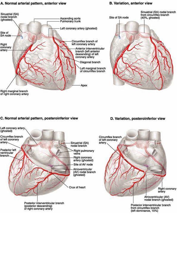 21 best Kardia images on Pinterest | Health, Cardiac nursing and Nurses