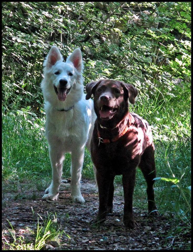 Luna & Asha