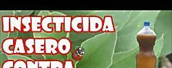 Insecticida casero para combatir plagas: pulgón, cochinilla, araña roja y mosca blanca en las plantas