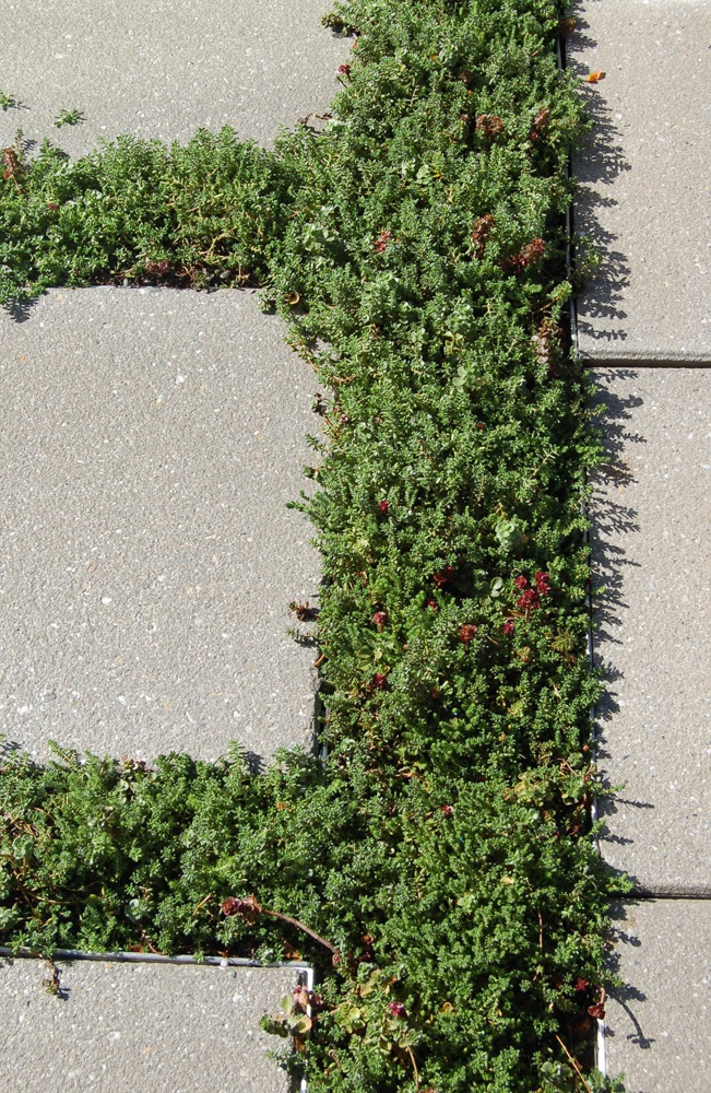 Roof Pavers And Sedum At 75 State Street In Boston, MA. | Surfaces |  Pinterest | Prairie Garden And Gardens