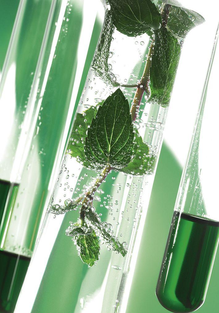 MENTHE by www.olivier-placet.com