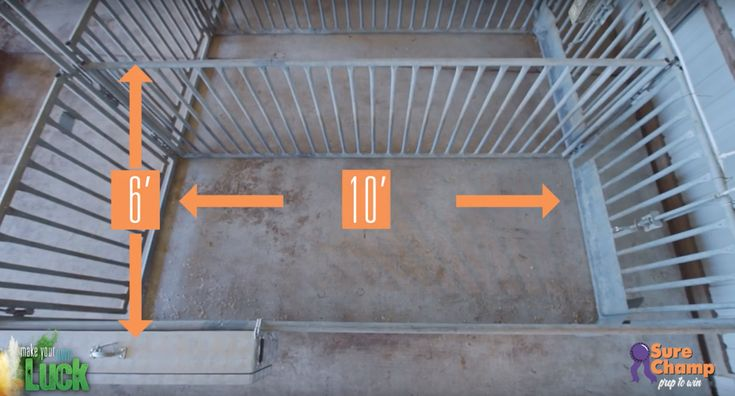 Prep to Win: How to set up your show pig pen. Tips on size, feeder and water placement and bedding #showpig #stockshowlife