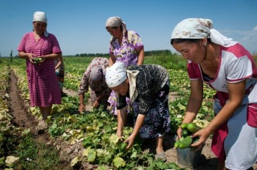 Global Forum And Expo On Family Farming   Summary And Outcomes. Organized  By The Hungarian