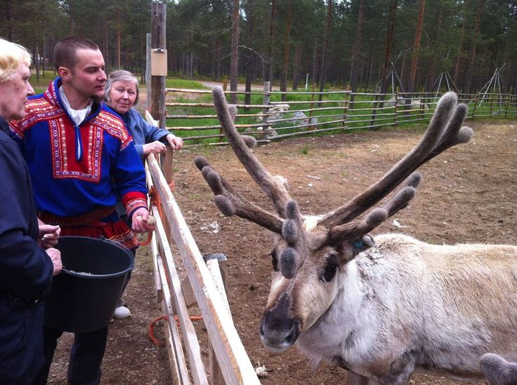 Summer visit to the reindeer farm