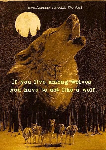 howling wolf, pack of wolves running, wolves at night, wolves in the wilderness, forest, full moon, words, quote, message