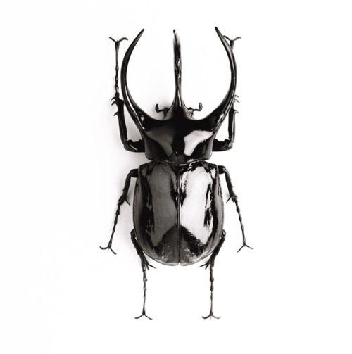 three horned rhino beetle.  Mac° - ID for Eric Helena - Adrian Mendoza - author of The Kaleidoscope : The Gift of Madness