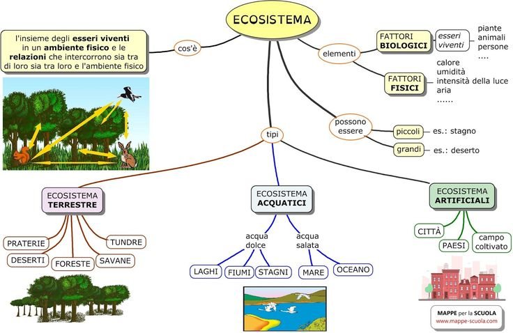 ECOSISTEMA+elementari+www.mappe-scuola.com+lui.jpg 1.600×1.040 pixel
