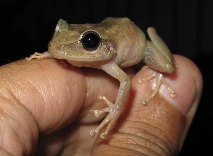 Name Puertorriqueno: 90 Best Coqui & Frog Images On Pinterest