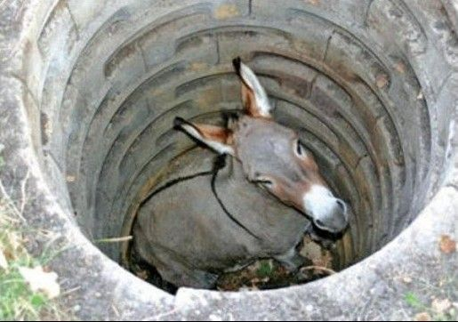 This is story of #donkey which #teaches you a #lesson. One day a #farmer's donkey fell down into a well . The animal cried #piteously for hours as the #farmer #tried to #figure out what to do. Finally, he decided that animal was old  and the well needed to be covered up anyway; it just wasn't worth it to save the donkey...