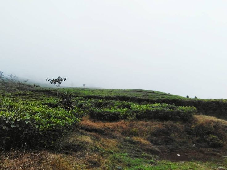 """""""#hiking #hikingjabar #tea #teagarden #teh #kebunteh"""""""
