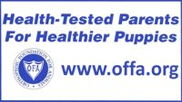 Before buying a puppy all people should make sure they check that the parents have been tested and had their results filed on this website. You can look them up by name to see.