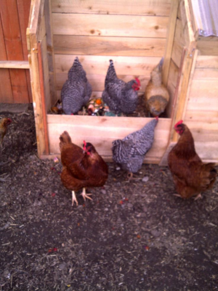 Chicken powered three stage compost bin inspiration for Chicken coop for 2 chickens