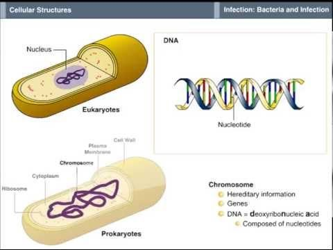 Bacterial Cell Structure - YouTube