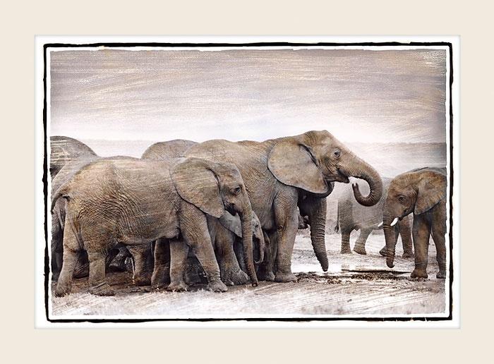 African Wildlife - Waterhole - Marlene Neumann Fine Art Photography  www.marleneneumann.com  neumann@worldonline.co.za