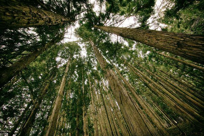 Wald mit Fischauge fotografiert! #Wald #Perspektive #Fotografie #Natur #grün #Holz