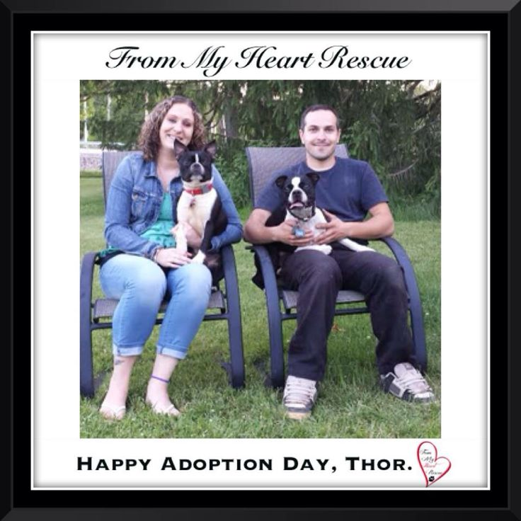 #Please ❤️+ #Pin #FromMyHeartRescue #RescueWithoutBorders #SavingOneDogAtaTime ~ #Happy #Adoption #Day #Thor *Many thanks to Lee Anne, Ola, Tammie and family for all their hard work behind the scenes. *Thank you❤️ *Info, Foster, Adoption, PayPal & e-transfer: frommyheartrescue@hotmail.com *Our Vets: Brock St. Animal Hospital/FMHR 905-430-2644 *Fundraising & Volunteering: FMHRfundraising@hotmail.com    *www.frommyheartrescue.com  *Find Us: Petfinder, FB, Twitter, Instagram, YouTube & Google+