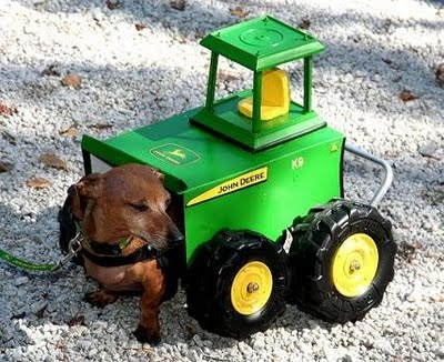 Is this Skippy Johntson from Alabama? Frankie, the Walk 'N Roll Dog: Paralyzed Doxie Ploughs through Life!