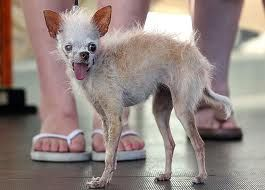 O cão mais feio do mundo morreu