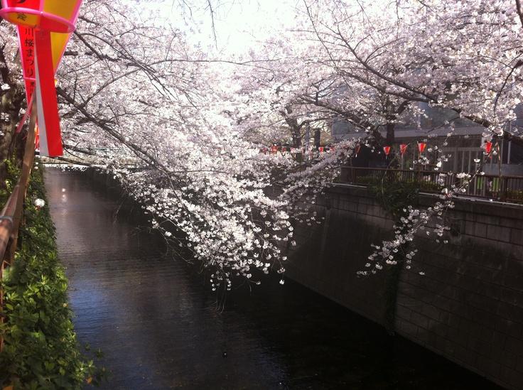 Meguro River April 2012