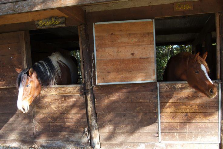 Explore Puglia on horseback...the area is a true paradise for horse lovers.