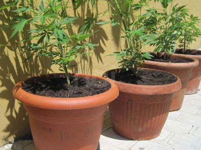 Pi di 25 fantastiche idee su piante di casa su pinterest - Prostituirsi in casa e reato ...