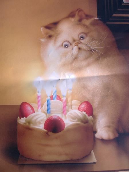 birthday cat - Makoto Muramatsu