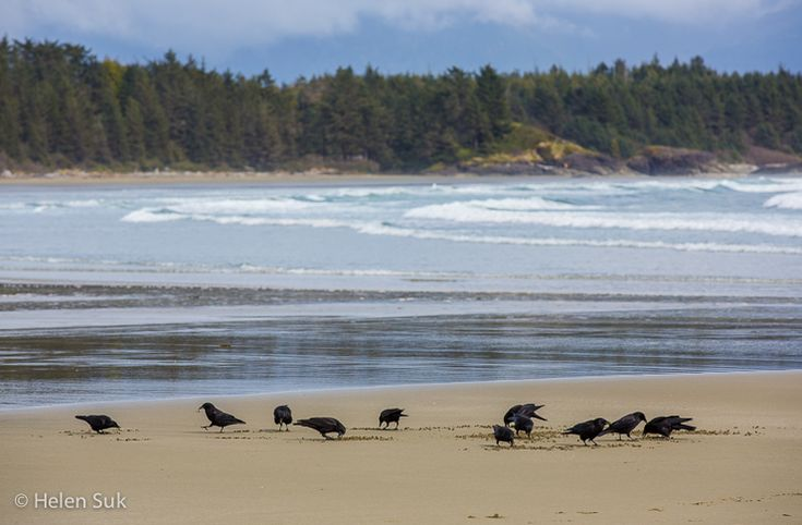 schooner cove, tofino beach, long beach