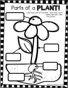 Use this printable to help reinforce what students know about plants! Your children can label the parts of a plant and then color the sheet. Use this in a Science center or in whole group.Enjoy!Check out my blog at www.outrageousfun321.blogspot.com