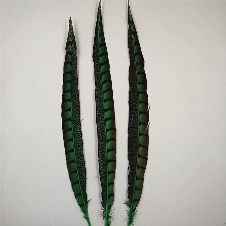 10pcs 40-45cm 16-18inch Pheasant tail Feathers bulk for craft Decoration DIY Cloth Bag hat (green) -- Continue to the product at the image link.