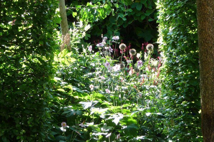 Door de omlijsting met de haagbeukzuilen (Carpinus betulus) is het plantvak achterin de tuin net een schilderij.