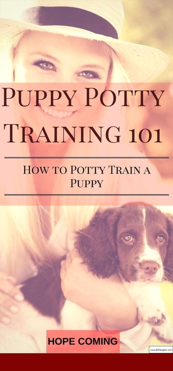 How To Train A One Year Old Dog To Pee Outside And Pics Of Tips
