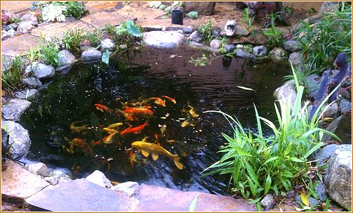 90 best images about small koi ponds on pinterest pond for Koi pool water gardens cleveleys